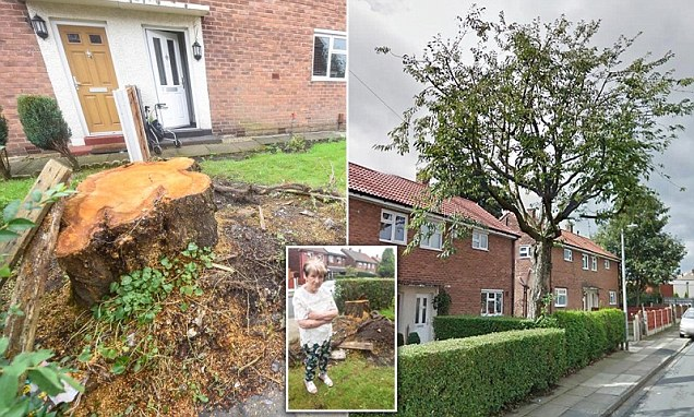 Salford family's fury as garden tree was cut down by council while they were on holiday