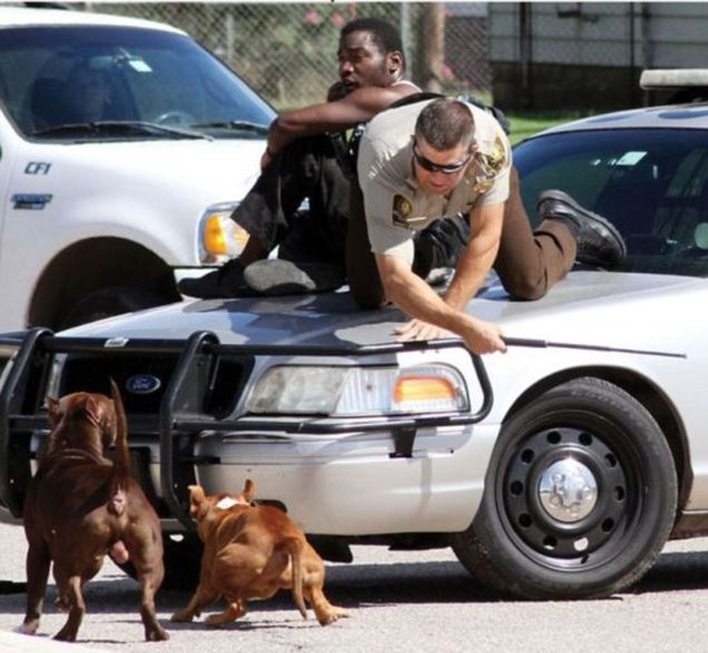 Oklahoma deputy pulls man on car hood to save him from two pit bulls